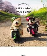 Naughty Shiba Inu with wool felt