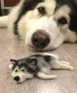 В Японии хозяин пса сделал его копию из собранной на полу шерсти.